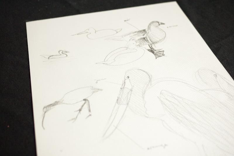Divers oiseaux